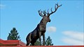 Image for Look Mabel, there's an elk on that motel - Revelstoke, BC