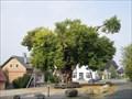 Image for Bordesholmer Linde, SH, Germany