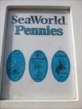 Image for Stingray  - Smasher - SeaWorld, Orlando, Florida.