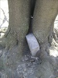 Image for Headstone Eating Tree - Port Credit, Ontario, Canada