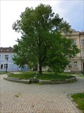 Image for Tree of the republic - Rícany u Prahy, Czech Republic