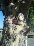 Image for Sign-eating Tree