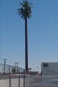 Image for Talking Tree - Van Buren & 32nd - Phoenix, AZ