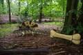 Image for Edaphosaurus - Amersfoort, NL