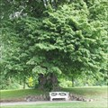 Image for Hans Christian Andersen lime tree in Augustenborg - Als, Denmark