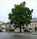 Image for Tree of the republic - Lomnice nad Popelkou, Czech Republic