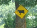 Image for Cow Crossing Sign - Johnson City, Tennessee