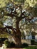 Image for Church Oak - New Braunfels, TX