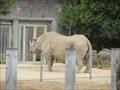 Image for Black Rhino at the San Francisco Zoo  - San Francisco, CA