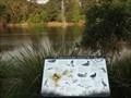 Image for Fauna of Lake Alexandra - Mittagong, NSW, Australia