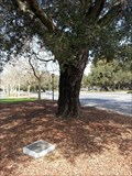 Image for The Gordon Hampton Oak - Stanford, CA