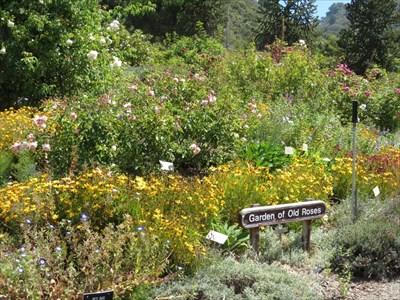 Garden of Old Roses at UCB Botanical Garden - Berkeley, CA - Rose ...