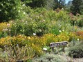 Image for Garden of Old Roses at UCB Botanical Garden - Berkeley, CA