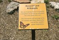 Image for Monarchs and Milkweeds - St. Louis Zoo - St. Louis, MO