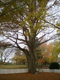 Image for Bald Cypress Tree - Millsboro, DE