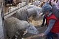 Image for Feed the Farm Animals - Landgut Wien Cobenzl - Wien, Austria