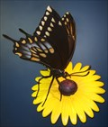 Image for Butterfly Sculpture Academy of Natural Sciences of Philadelphia - Philadelphia, PA