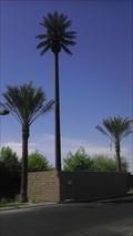 Image for Talking Tree - Gilbert & Riggs - Chandler, AZ