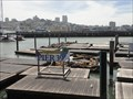 Image for Marine mammal mystery: Sea lions disappear from San Francisco's Pier 39