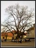 Image for Bystrcká lípa - Brno, Czech Republic
