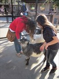 Image for Happy Hollow Zoo Petting Area - San Jose, CA