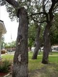 Image for Whipping Oak - Seguin, TX