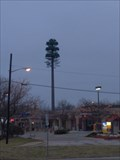 Image for The Funky Tree (Robins nest) - West Bloomfield, MI