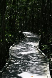 nice, long section of boardwalk thru Four Mile Eco Preserve in Cape Coral FL.