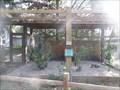 Image for Burrowing Owl  -  Davie, FL