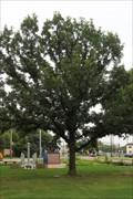 Image for WWII Veterans Tree -- Veterans Memorial Park, Fort Worth TX