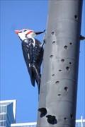 Image for Woodpecker Column - Toronto, ON