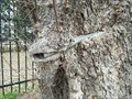 Image for Dunaway Cemetery pipe eating tree - Frisco Texas