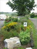 Image for Monarch Waystation at Jonesborough Wastewater Treatment Plant - Jonesborough, TN