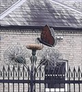 Image for Butterfly and dandelion - Darlington, England