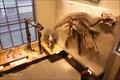 Image for Dinosaur Skeleton, Beneski Natural History Museum - Amherst, MA