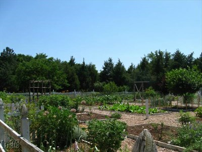 The Ferry Farm garden has mulched paths which meander through the varied plants.
