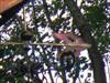 Photo gros plan de la partie pointe de la flèche de direction.  Photo closeup of the tip portion of the direction arrow.