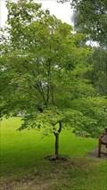 Image for Moira Ratcliffe - Edwalton Parish Church Garden - Edwalton, Nottinghamshire