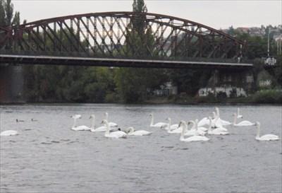 Vyšehradský železnicní most - Praha