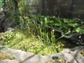 Image for Carnivorous Plant House - Frederik Meijer Gardens & Sculpture Park