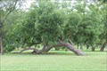 Image for Trinity Marker Tree -- Fort Worth TX