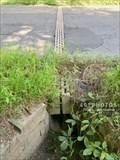 Image for Salamander Crossing - Henry Street - Amherst, Massachusetts