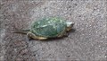 Image for Snapping Turtle Crossing in Fitzroy Provincial Park - Fitzroy Harbour, ON