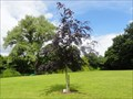 Image for Millennium Tree - Northwich, UK