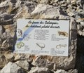 Image for Fauna of the Calanques - Cassis, France