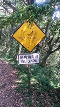 Image for Owls crossing - Yangmingshan National park Taiwan