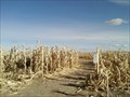 Image for Corn Maze- Vaughn, Montana