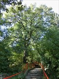 Image for Fraxinus excelsior - Prague, Czech Republic