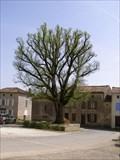 "Image for Tilleul ""arbre de la liberte"" - Tillou,Fr"
