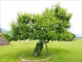Image for Father Ravalli's Crabapple Tree - St. Mary's Mission Historic District - Stevensville, MT